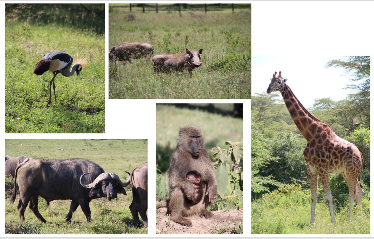 מחנה אימונים בקניה