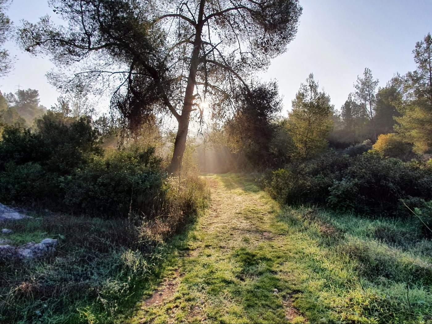 יער אשתעול מסלולים